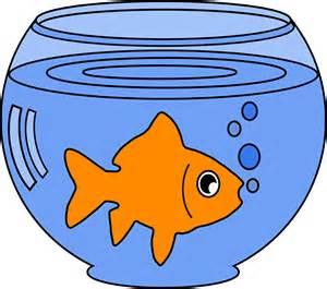 a-goldfish
