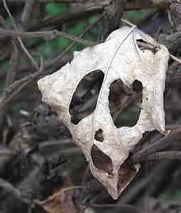 a-leaf
