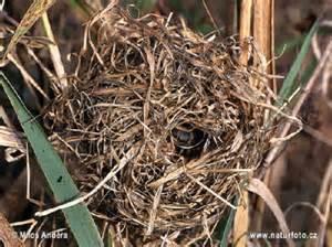 a-mouse-nest