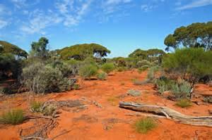 a-outback-scene