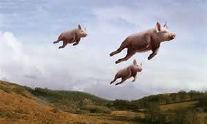 a-pigs-image