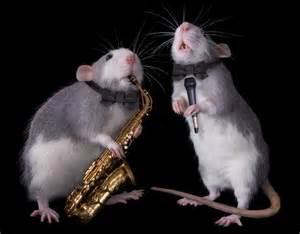 a-rat-image
