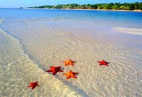 a-starfish-image